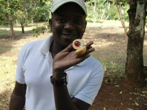 Check out the fruit that nutmeg and mace come from!