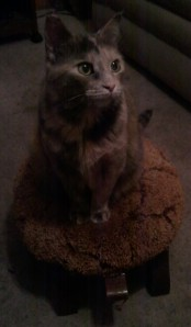 Queen Penny riding her turtle
